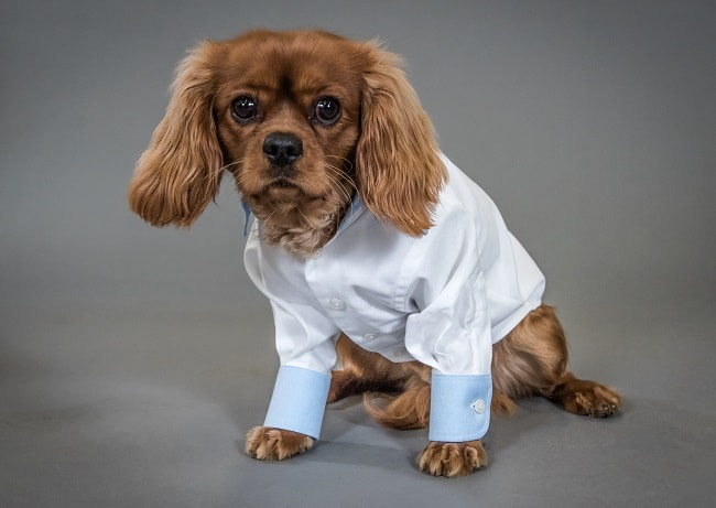 Savile Row Company Launch Dapper Dogs