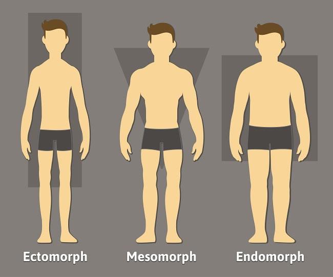 Types of somatotypes