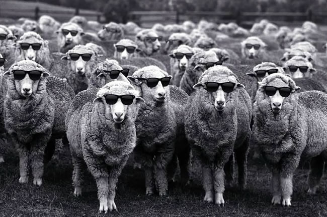 The Woolmark Company Launches Sheep Art Campaign
